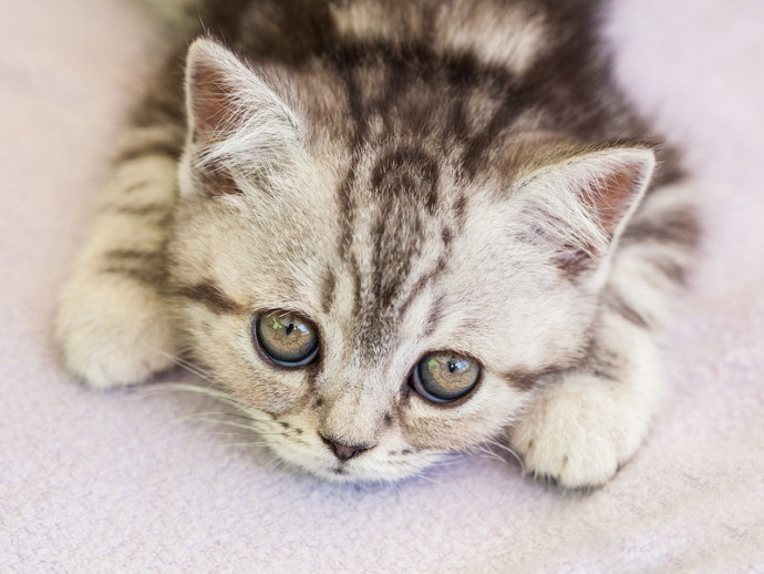【獣医師執筆】猫も「ストレス」を感じる!? 今からできる原因別の対策法とは