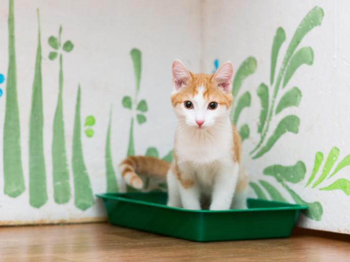 【獣医師執筆】下痢をしたら注意?病気の可能性がある「猫のうんち」3パターン