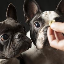 【獣医師執筆】ゴミ箱あさりが直らない!犬が「何でも食べちゃう」いくつかのパターン