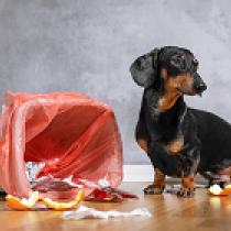 【獣医師執筆】ゴミ箱あさりに注意!犬が「何でも食べちゃう」いくつかのパターン