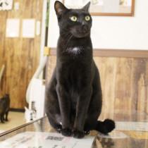 保護猫カフェってどんなところ?岐阜県羽島市『ねこぱんち』の取り組みとは
