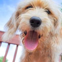 味を感じるだけじゃない!? 知ればもっと仲良くなれる「犬の舌」について