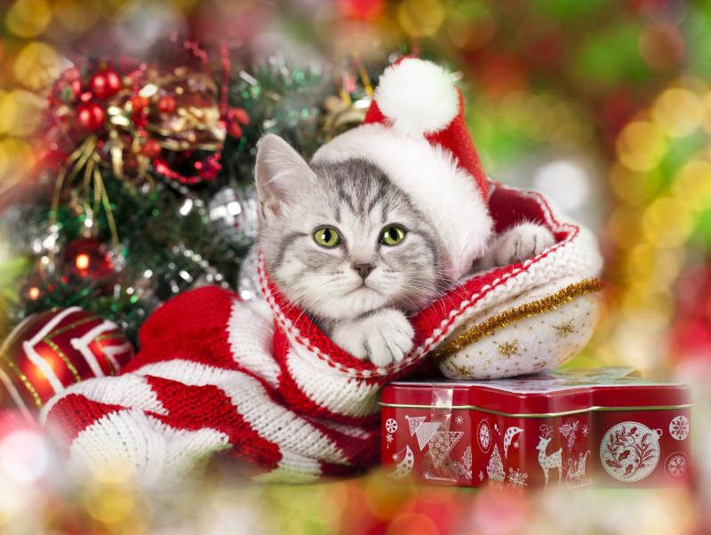 愛猫と心に残るクリスマスを過ごそう!「おすすめ仮装&楽しみ方」大公開