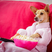 うちの子のテレビ出演も夢じゃない!? タレント犬の事務所に直接取材~第1弾~