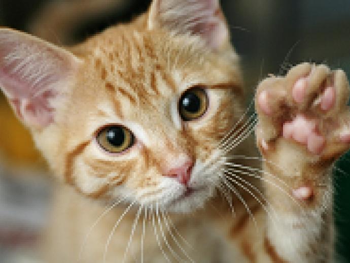 【獣医師執筆】プニプニな感触!「猫の肉球」の大切な役割とは