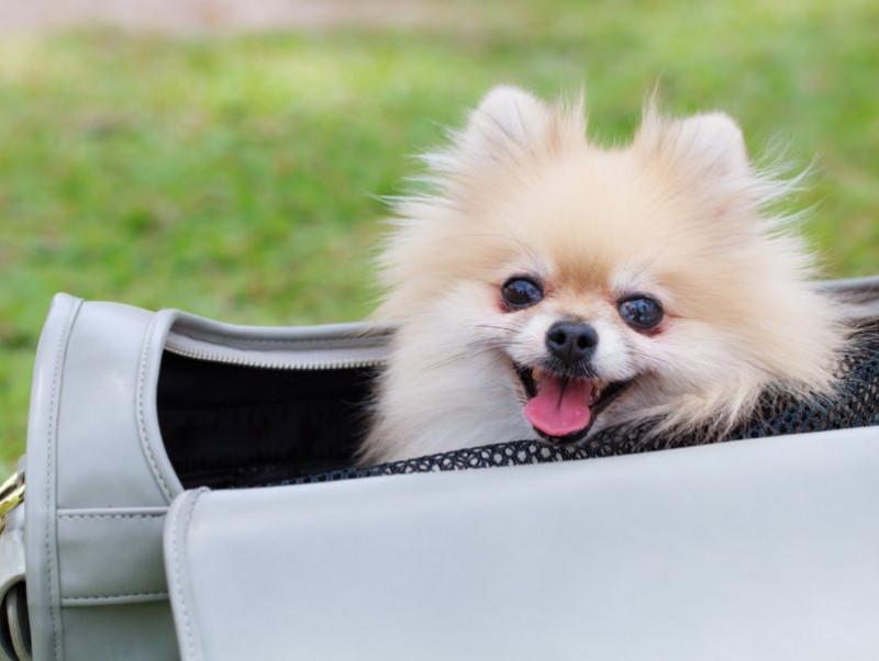 防災にも役立つ!秋の行楽に準備しておきたい「犬のお役立ちグッズ」3選