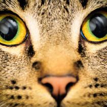 【獣医師執筆】環境と仕草に要注意!猫の眼を守るために「日常生活で気をつけること」とは