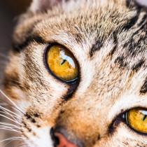 愛猫に長生きしてもらうために!知っておきたい「ペットドック」について~猫編~