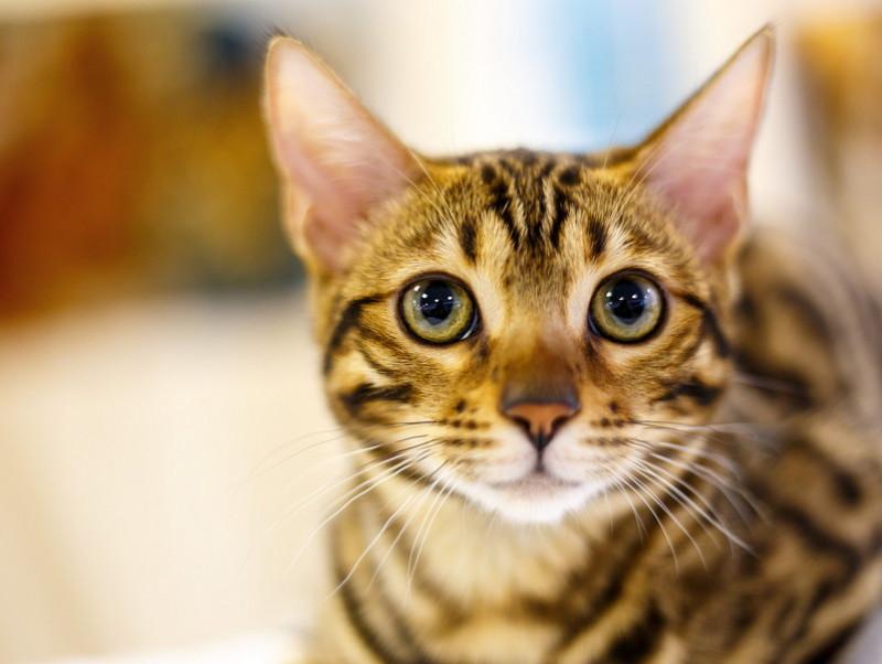 【キャットケアスぺシャリスト執筆】こんなにも大好きでごめんね!「猫に申し訳ないと思った瞬間」5選
