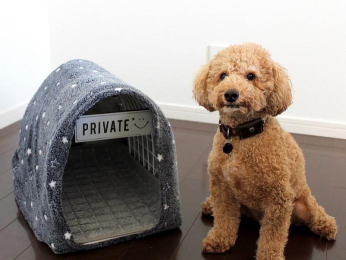 100均商品で簡単DIY!犬猫用「あったかハウス」の作り方