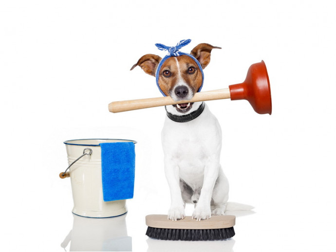 実際にやってみた!犬を飼っているおうちの「大掃除のポイント」とは