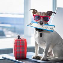 愛犬と海外旅行したい!めいっぱい楽しむために「事前準備&注意点」を理解しよう