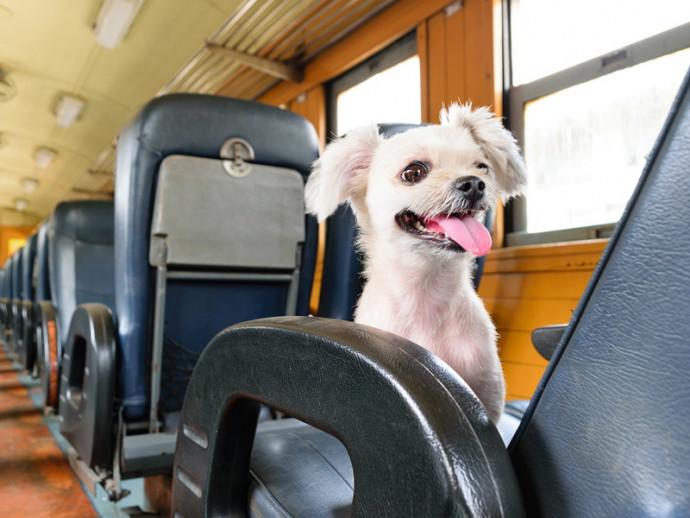日本に着くまで安心は禁物!? 愛犬との海外旅行「現地での生活&帰国まで」