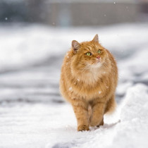 本当にこたつが好きなの?猫の生体に合わせた「正しい暖房の使い方」