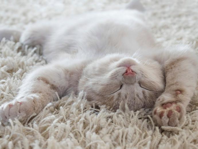 【獣医師執筆】かわいいけどこんな時は危険!? 猫が「寝言」を言う理由と注意すべきこと