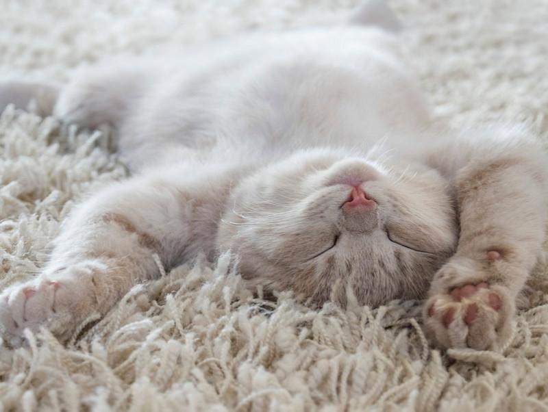 かわいいけどこんな時は危険!? 猫が「寝言」を言う理由と注意すべきこと