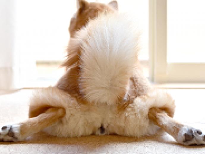 【獣医師執筆】犬が「おしり」を嗅ぐのはなぜ?そのしぐさの意味と嗅覚のおもしろ雑学
