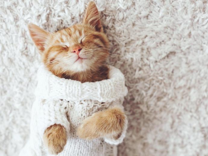 冬は猫の受診が増加!? 「冬」に気をつけたい猫の病気とは