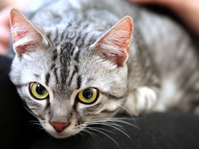 「まばたき」で気持ちを伝える⁉ おもしろい猫のコミュニケーション