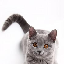 清潔に保つことが大切!猫の「スタッドテイル」について理解しておきたいこと