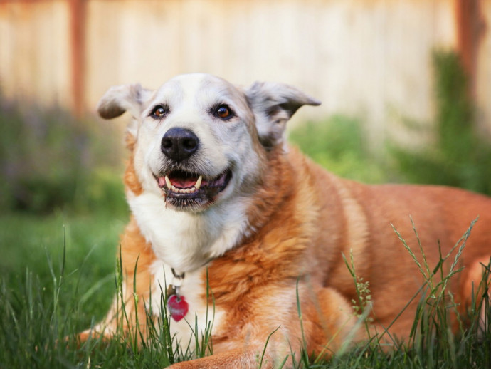【獣医師執筆】若さを保つために!高齢犬の「こころ」と「からだ」を刺激しよう