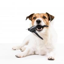 3つのグッズで犬の「爪切り」に挑戦!使い方や注意点も要チェック