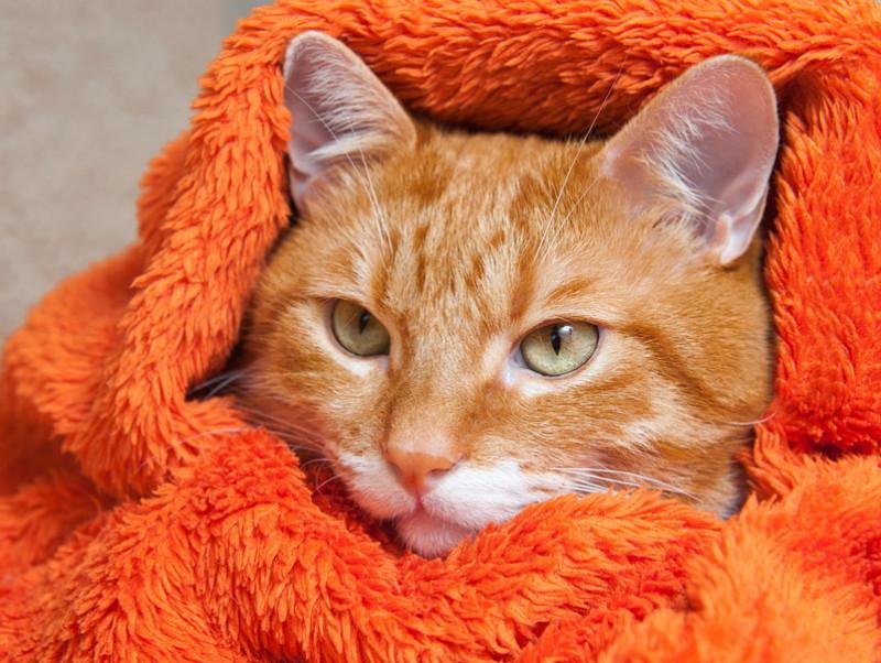 季節の変わり目は特に注意!猫の「風邪予防」実践したい習慣5つ