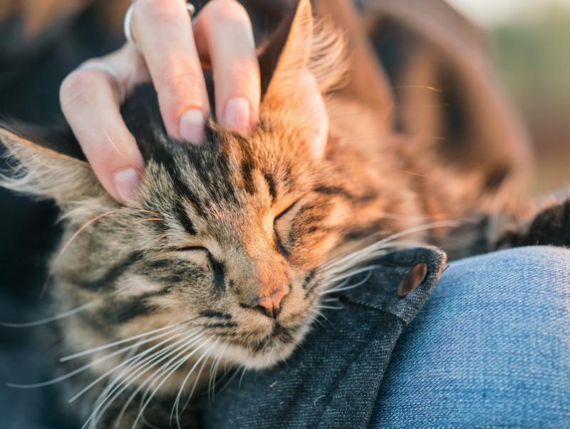 【獣医師執筆】男の子と女の子、それぞれの「性質」は?素敵な猫ライフを送るための基礎知識