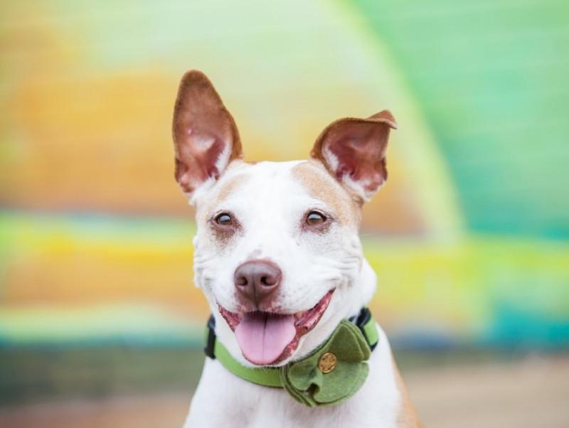 実は知られていない?いろいろ使える犬の「首輪&ハーネス」特徴と注意点