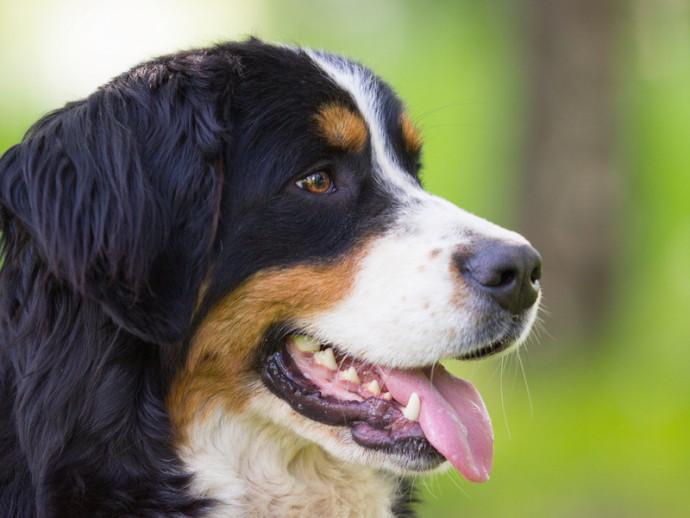 大型犬との暮らしも夢じゃない!? 迎える前に「生活上の注意点」を理解しよう