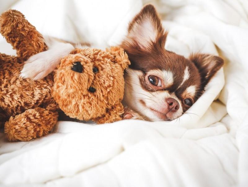 愛らしい瞳にメロメロ!初心者さん必見「小型犬」との暮らし&注意点