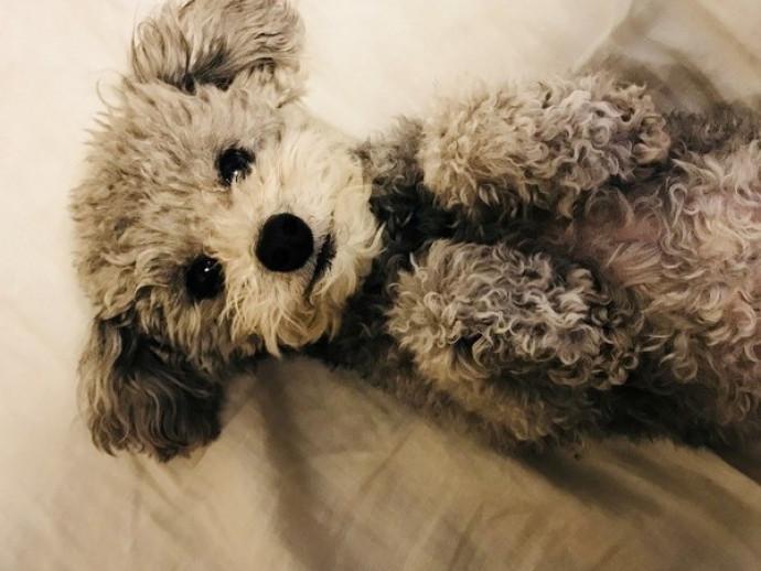あげだしたらキリがない!愛犬家座談会「犬のどんなところが好きですか?」