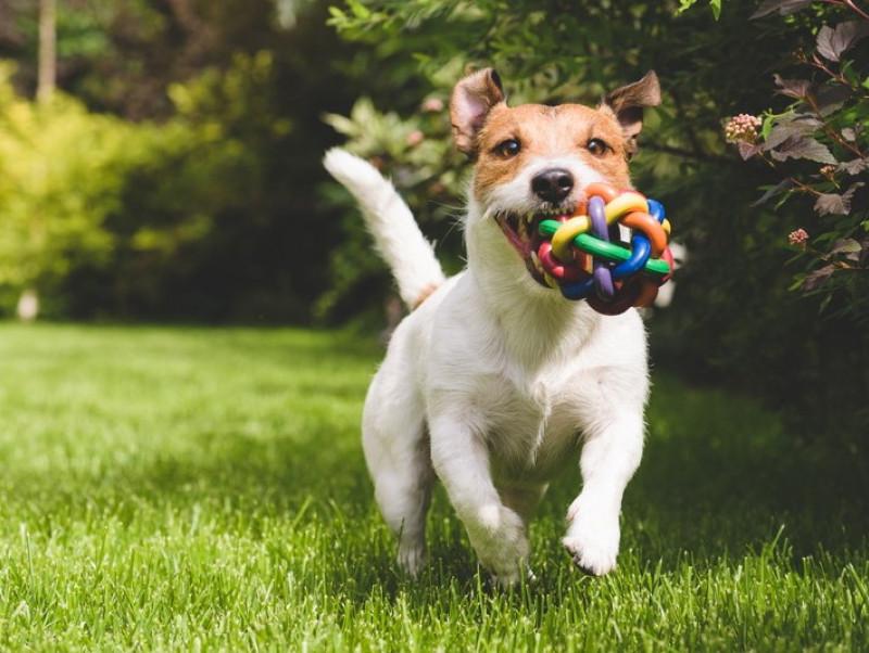 ドッグトレーナーが教える!「うまく遊べない犬」気になる原因&実践したい対処法