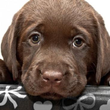 【獣医師執筆】人間だけじゃない!? 犬の「反抗期」おもしろい生体&正しい付き合い方