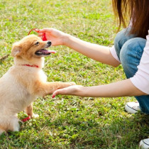 家族で統一することが大切!子犬を迎えたら実践したい「しつけのポイント」