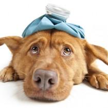 子犬や老犬がなりやすい?犬風邪と飛ばれる「ケンネルコフ症候群」とは
