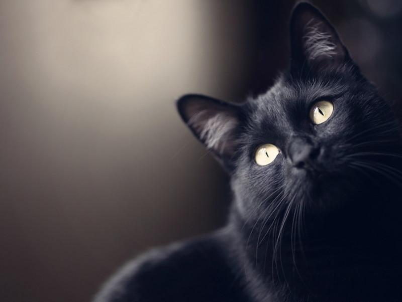 ストレスの原因を排除してあげよう!猫の「メンタルチェック法」