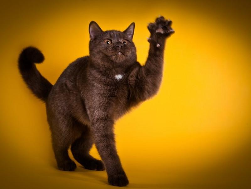 猫が「引っ掻く&噛む」のはなぜ?気になる原因と接し方について