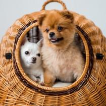 外飼い?それとも室内飼い?犬が生活をする「最適な場所」について