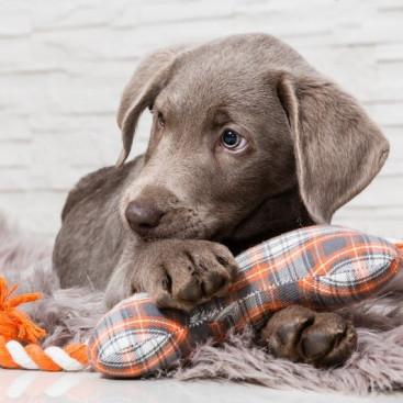 100均グッズ&飼い主さんの古着を活かそう!「小型犬のおもちゃ」簡単DIY