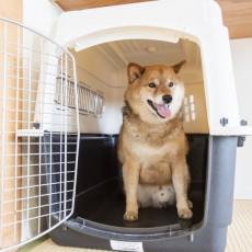 落ち着く場所で練習しよう!犬の「クレートトレーニング」3ステップ
