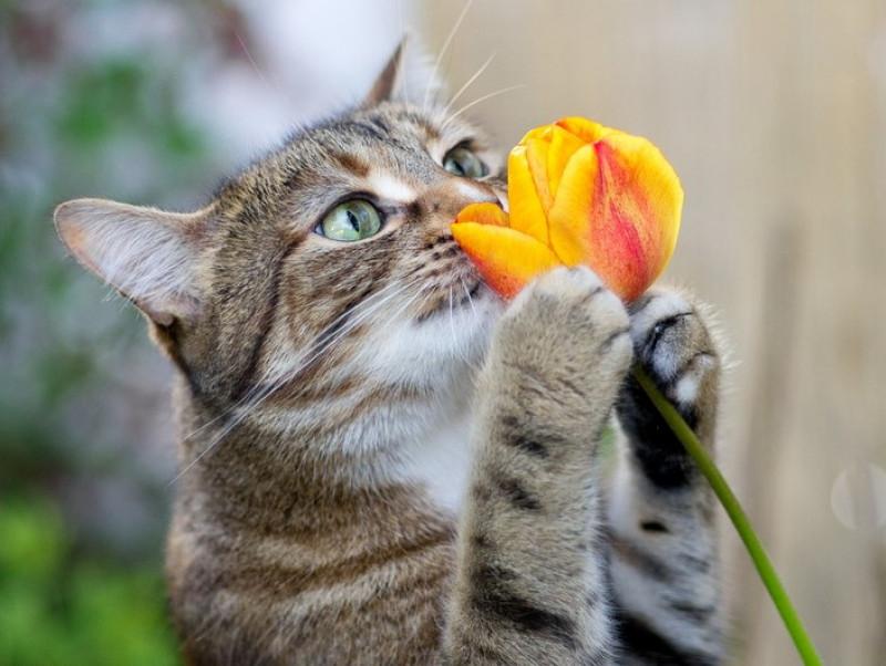 猫も「ニオイ」でコミュニケーションをとる?驚きの実態&気をつけたいこと