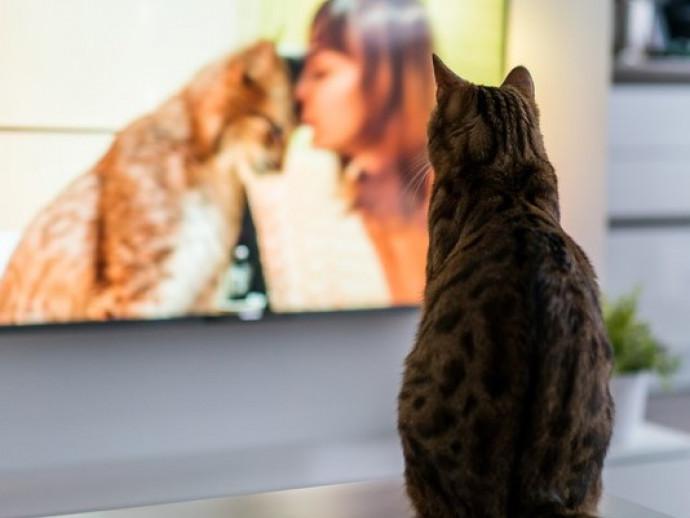 【獣医師執筆】そんなにおもしろいの?猫が「テレビ」をじっと見る理由を解説