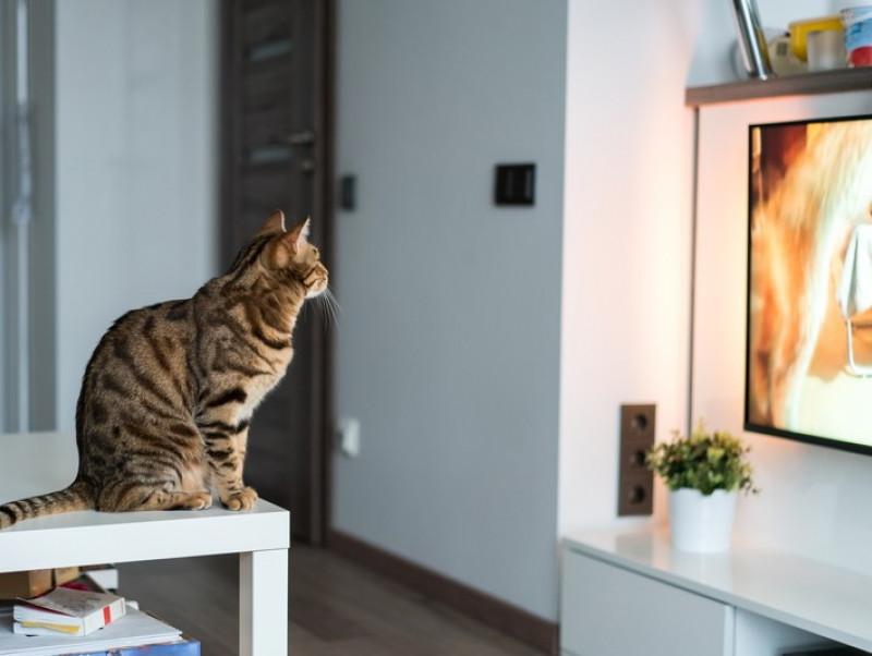 そんなにおもしろいの?猫が「テレビ」をじっと見る理由を獣医師が解説