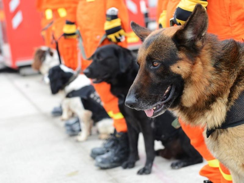 日本レスキュー協会に取材!「災害救助犬」を生む訓練とは