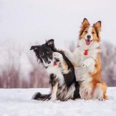 愛犬はいつも通りで大丈夫?「冬の散歩」で気をつけること&遊び方