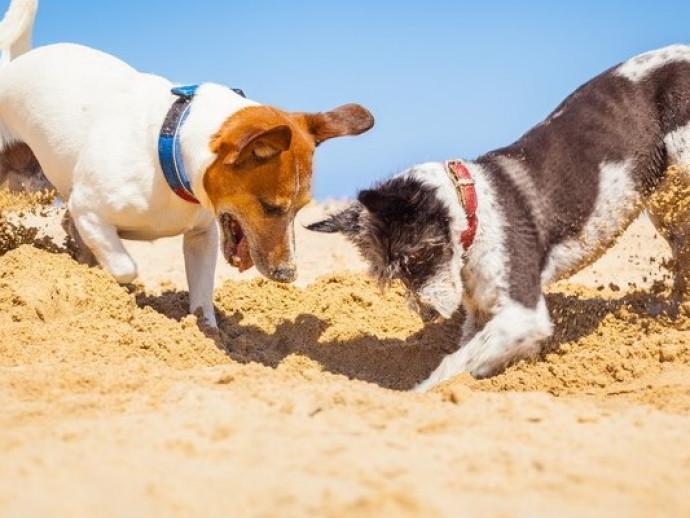 穴を掘る行動には意味があった!? 犬の「ここ掘れワンワン」に隠れた秘密
