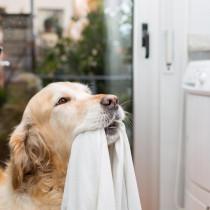 人間と同じ洗剤でOK?犬猫の洋服やタオル「正しい洗い方」を獣医師が解説