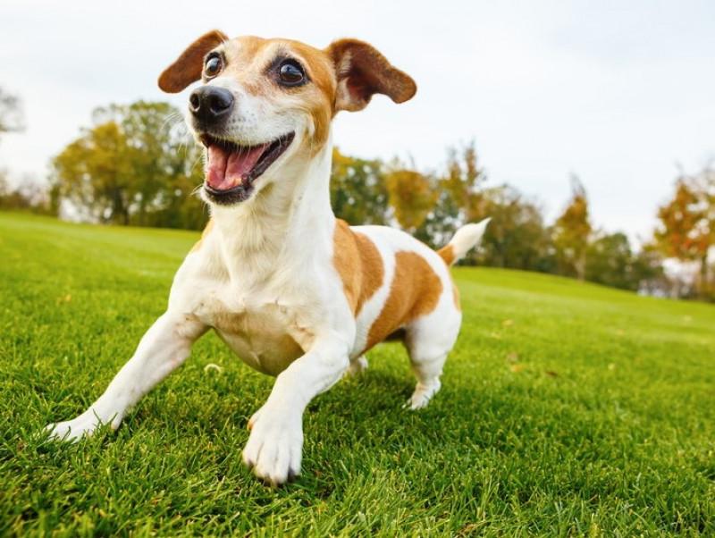 ドッグトレーナーが教える!「落ち着きがない犬」その理由&おすすめ対処法