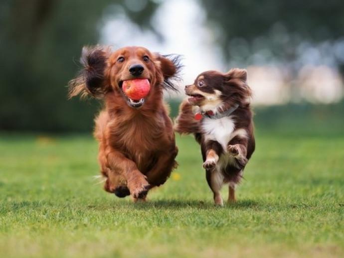 犬同士でも「好き嫌い」があるのはなんで?人もきっと共感できる犬の世界